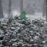Frog sentry