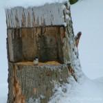 Squirrel Stump Diner