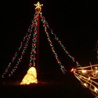 Seals Like Christmas Trees