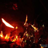 leaf-fire